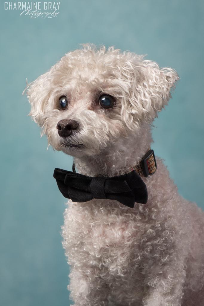 pet photographer, pet photography, pet portrait, pet, animal, charmaine gray photography, charmaine gray pet photography, san diego