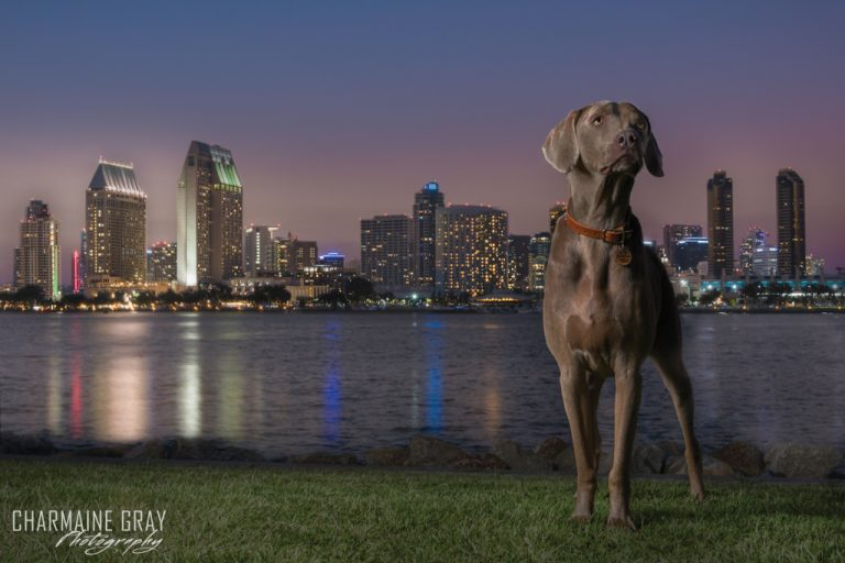 pet photographer, pet photography, pet portrait, pet, animal, charmaine gray photography, charmaine gray pet photography, san diego