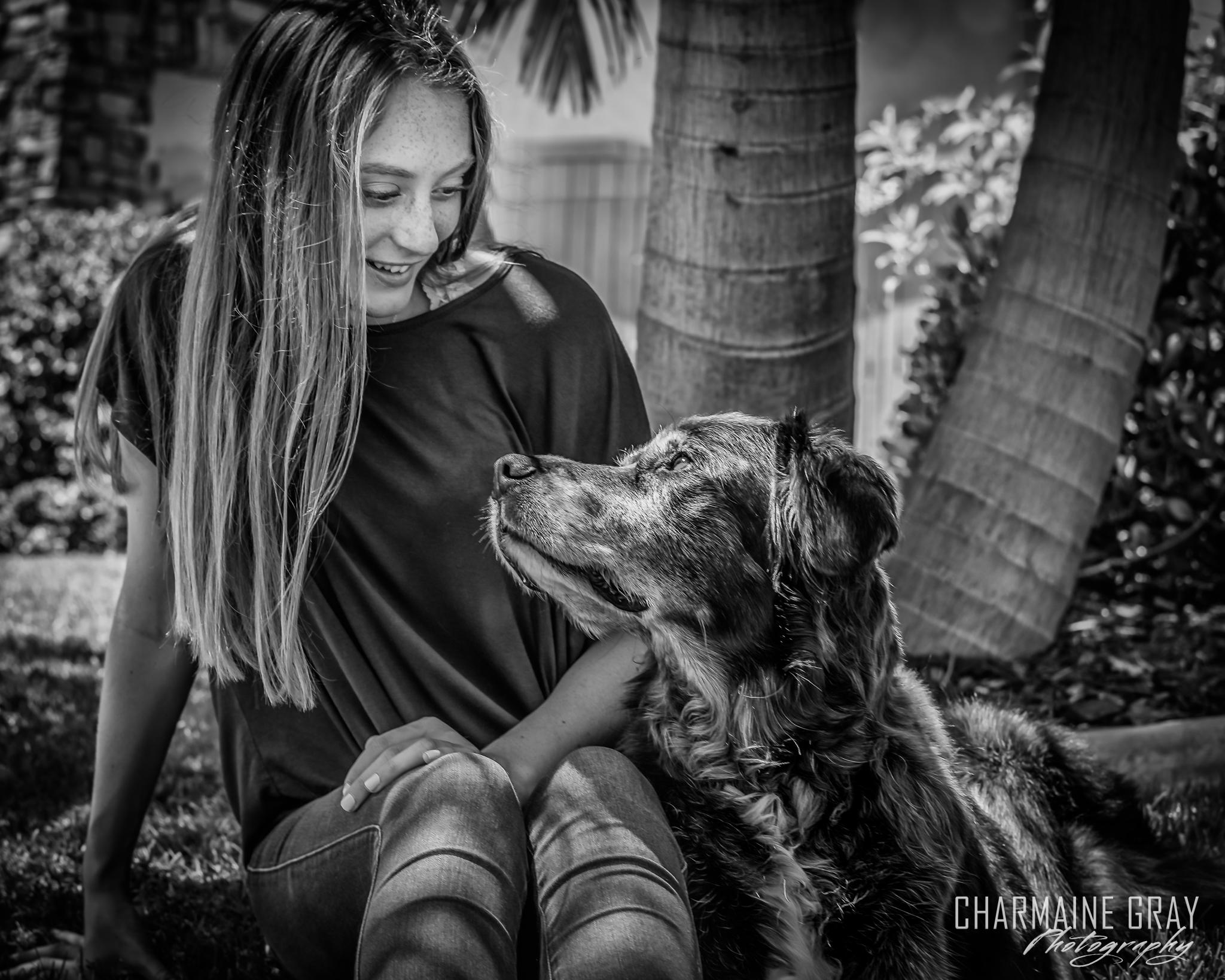 pet photographer, pet photography, pet portrait, pet, animal, charmaine gray photography, charmaine gray pet photography, san diego,flat coated retreiver,dog