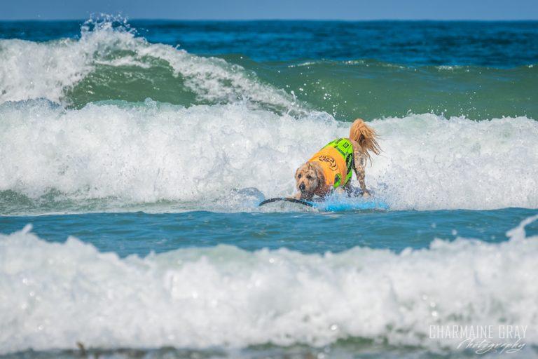 pet photographer, pet photography, pet portrait, pet, animal, charmaine gray photography, charmaine gray pet photography, san diego,dog,canine,california,surf,surfing