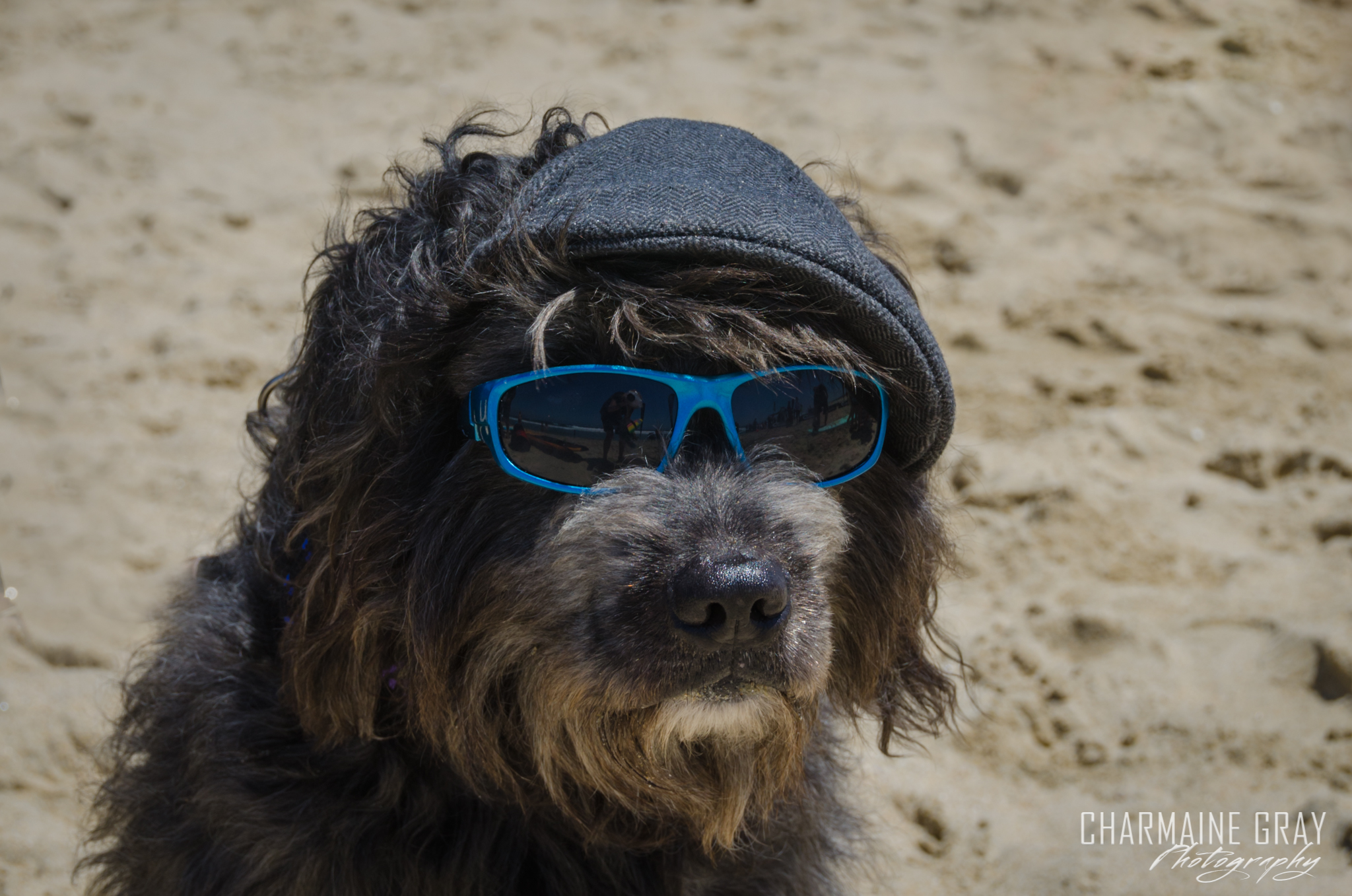 pet photographer, pet photography, pet portrait, pet, animal, charmaine gray photography, charmaine gray pet photography, san diego,dog,canine,california,surf,surfing,doodle, brody