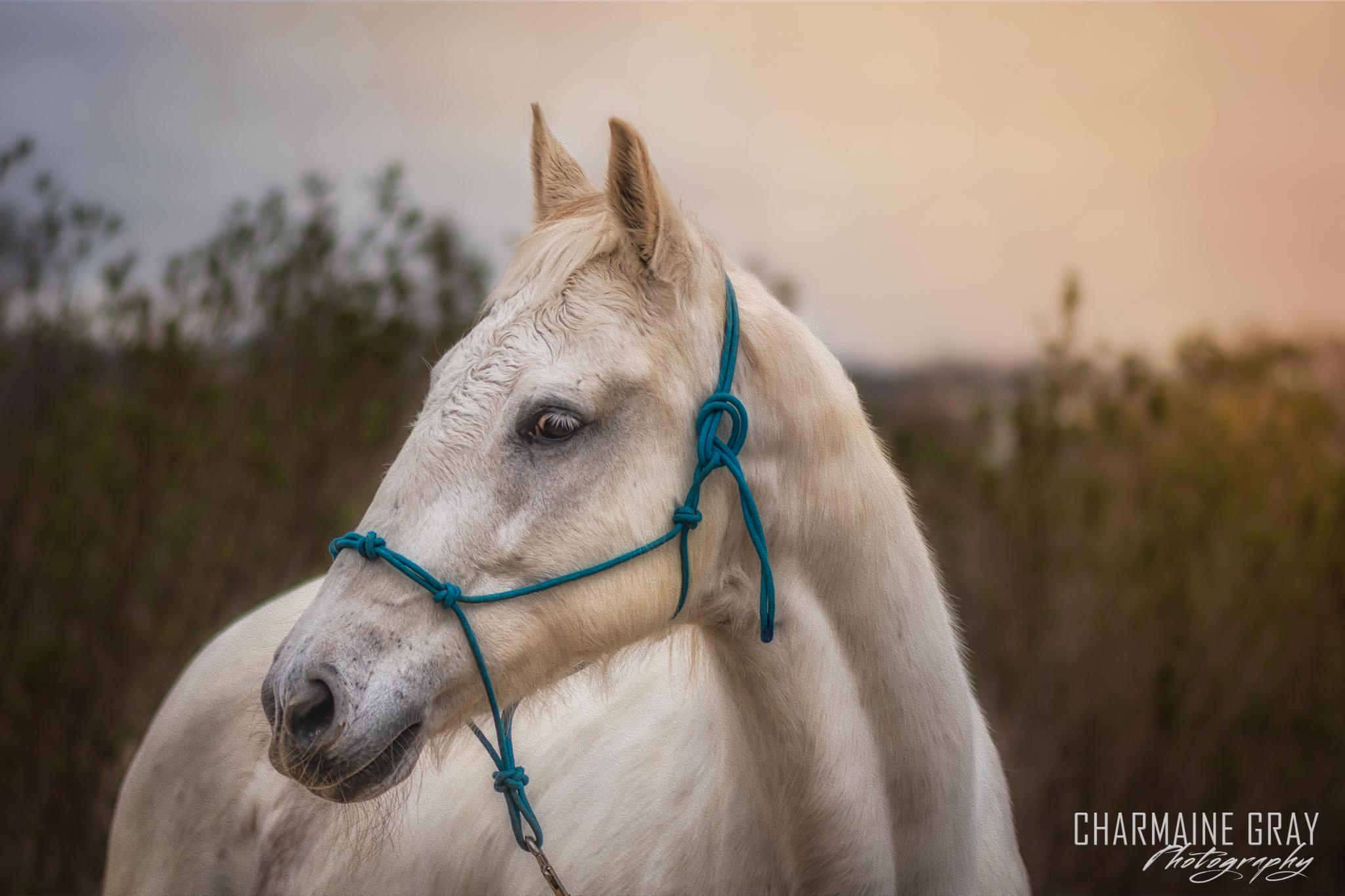 horse,equine,pet photographer, pet photography, pet portrait, pet, animal, charmaine gray photography, charmaine gray pet photography, san diego