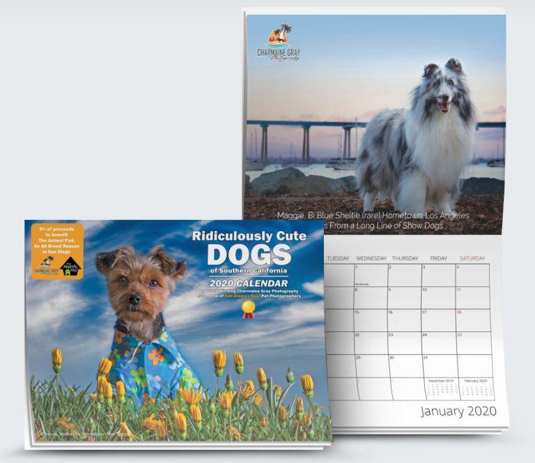 chihuahua rescue calendar 2021 foster dog rescue donate