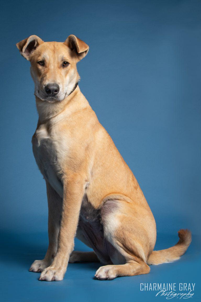 pet photographer, pet photography, pet portrait, pet, animal, charmaine gray photography, charmaine gray pet photography, san diego,rescue